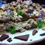 90 gallons freshwater fish tank (mostly fish and non-living decorations) - Our Front Room Malawi Aquarium