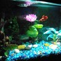 25 gallons freshwater fish tank (mostly fish and non-living decorations) - Elliot's 5 gallon tank