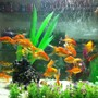 60 gallons freshwater fish tank (mostly fish and non-living decorations) - gold