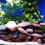 125 gallons freshwater fish tank (mostly fish and non-living decorations) - 125g
