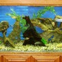 150 gallons freshwater fish tank (mostly fish and non-living decorations) - 150 Gallon
