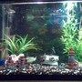 40 gallons freshwater fish tank (mostly fish and non-living decorations) - New tank