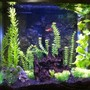 30 gallons freshwater fish tank (mostly fish and non-living decorations) - Freshwater tank with artificial plants, guppies, neon tetras
