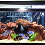 75 gallons freshwater fish tank (mostly fish and non-living decorations) - Lake tanganykan tank setup with fronts, calvus, leleupi, blue dolphin moorii, gold nugget pleco, chocolate zebra pleco, albino & reg bristle nose, clown pleco , rafael & bumblebee catfish & black ghost knife fish