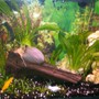 15 gallons freshwater fish tank (mostly fish and non-living decorations) - Thhought would find out what people think