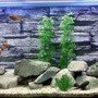 55 gallons freshwater fish tank (mostly fish and non-living decorations) - My Cichlid Tank.