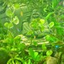 20 gallons freshwater fish tank (mostly fish and non-living decorations) - Moment of Zen-neons.... tetras