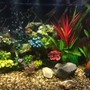 46 gallons freshwater fish tank (mostly fish and non-living decorations) - 46 Gallon Bow Front Cichlid Tank