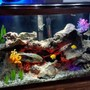 29 gallons freshwater fish tank (mostly fish and non-living decorations) - Yellow lab species tank