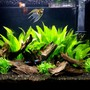 29 gallons freshwater fish tank (mostly fish and non-living decorations) - 29 gallon community tank