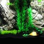 55 gallons freshwater fish tank (mostly fish and non-living decorations) - New 55g