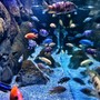 125 gallons freshwater fish tank (mostly fish and non-living decorations) - African cichlids