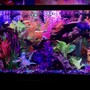 125 gallons freshwater fish tank (mostly fish and non-living decorations) - Front view tank