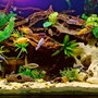 200 gallons freshwater fish tank (mostly fish and non-living decorations) - My Freshwater Tank