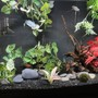 60 gallons freshwater fish tank (mostly fish and non-living decorations) - .