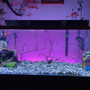 75 gallons freshwater fish tank (mostly fish and non-living decorations) - The view.