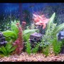 30 gallons freshwater fish tank (mostly fish and non-living decorations) - This s my Tank {see planted tanks} before I went all natural. Loved it, but wanted to go real plants . . . .