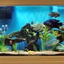 150 gallons freshwater fish tank (mostly fish and non-living decorations) - Large South and Central American Cichlids