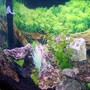45 gallons freshwater fish tank (mostly fish and non-living decorations) - my 45gallon - close up