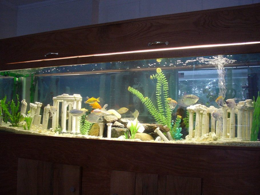 Supermgl 39 s freshwater tanks photo id 773 full version for 125 gallon fish tank