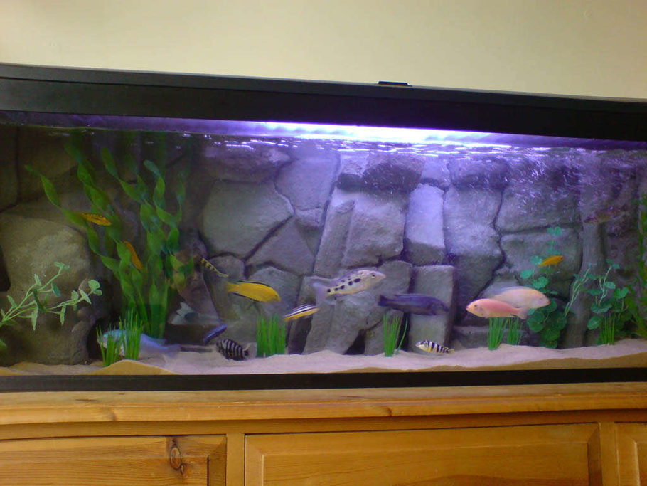 4ft Tank With Homemade Background 1 Marine White Bulb And Blue Actnic Light To