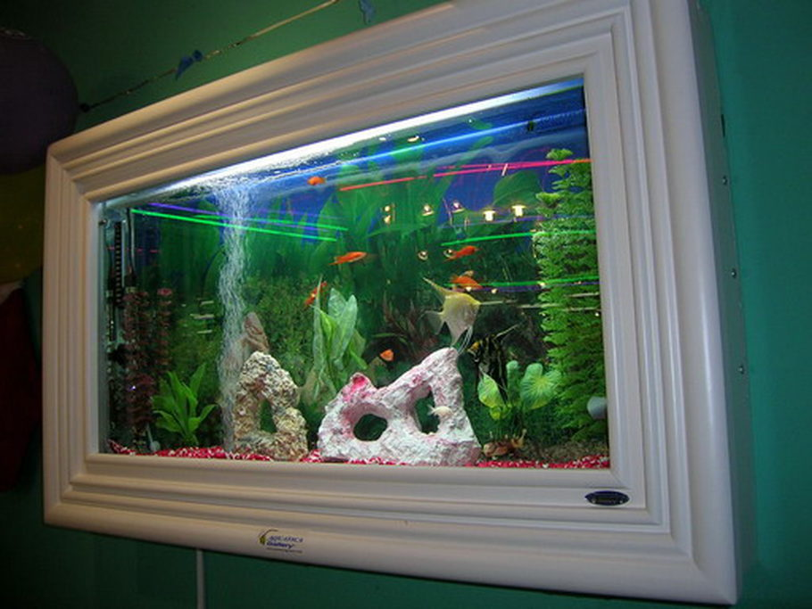 Aquaticagallery 39 s freshwater tanks photo id 1749 full for Wall hanging fish tank