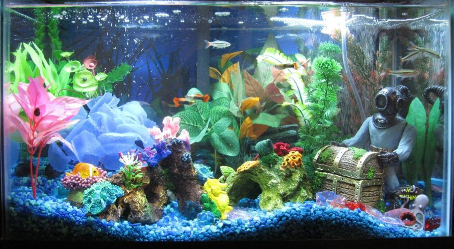 Happydad 39 s freshwater tanks photo id 21504 full for 10 gallon fish tank decoration ideas