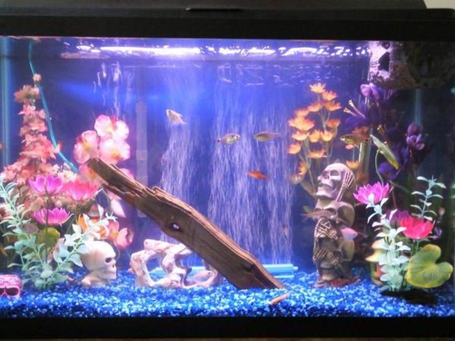 My Fish Aquarium 1000 Aquarium Ideas