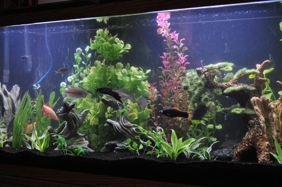 55 Gallon Glass Tank With Base And Standard Lighting Fluval 305 Filter Black Sand