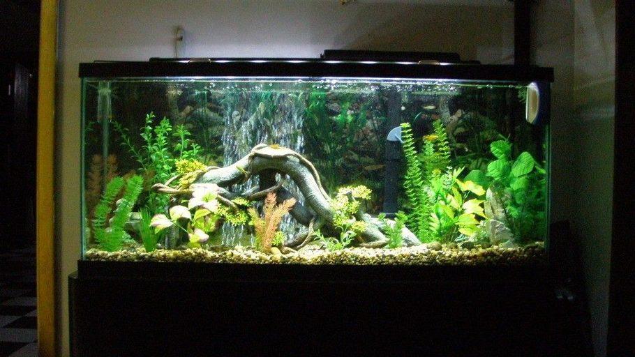 Samiam 39 s freshwater tanks photo id 31300 full version for 55 gallon fish tank size