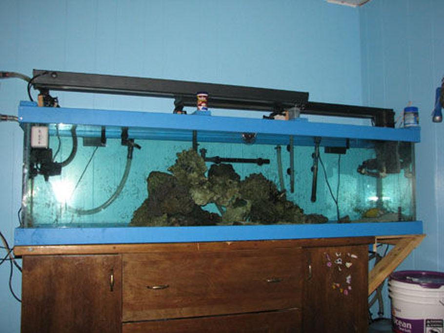 Bamboo Shark Tank | Rednecks S Freshwater Tanks Photo Id 33921 Full Version