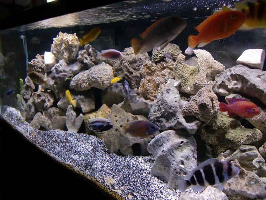 Meticulous 39 s freshwater tanks photo id 34636 full for African cichlid rock decoration