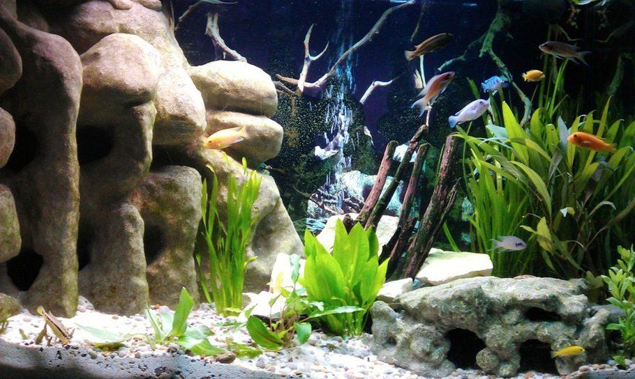 Most Beautiful Freshwater Tanks ( 2012 )   RateMyFishTank.com