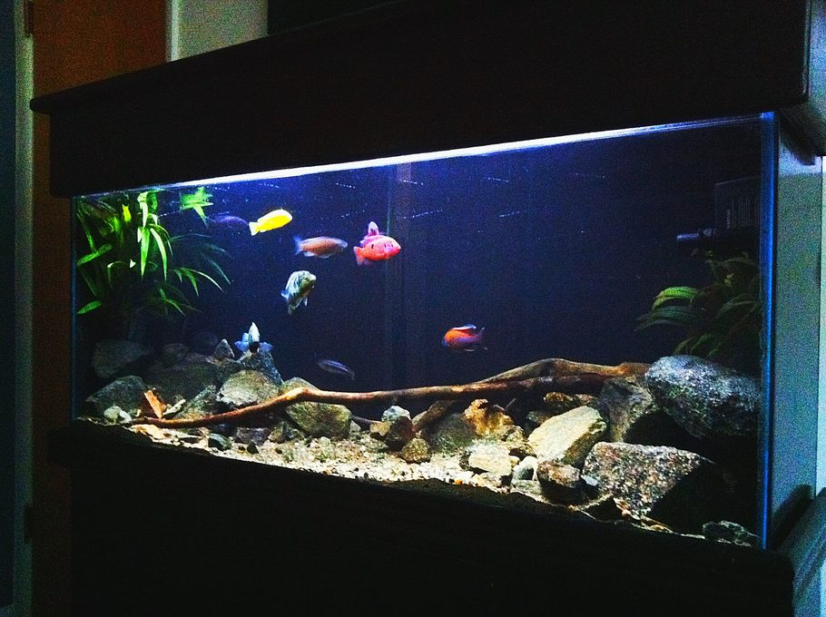 Joshmeneses 39 s freshwater tanks photo id 38961 full for 55 gallon aquarium decoration ideas