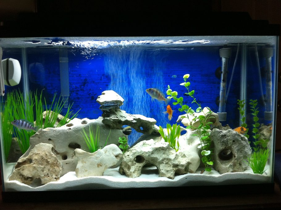 Mharliecaldonado 39 s freshwater tanks photo id 41429 for African cichlid rock decoration