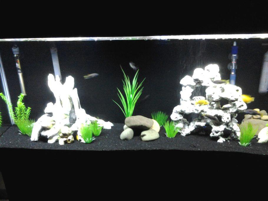 Thegerm76 39 s freshwater tanks photo id 42169 full for Black sand fish tank