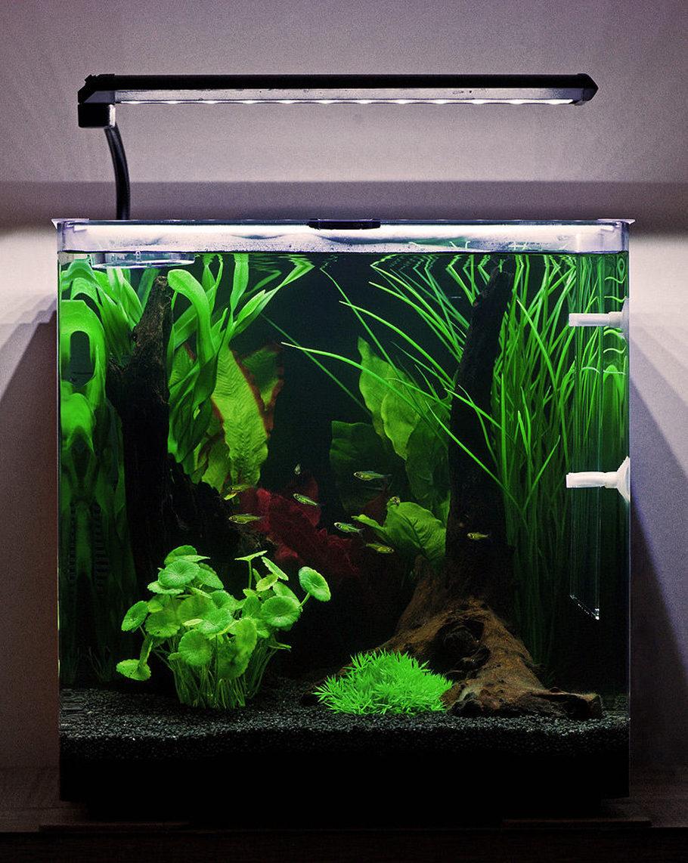 Nickb86 S Freshwater Tanks Photo Id 43217 Full Version