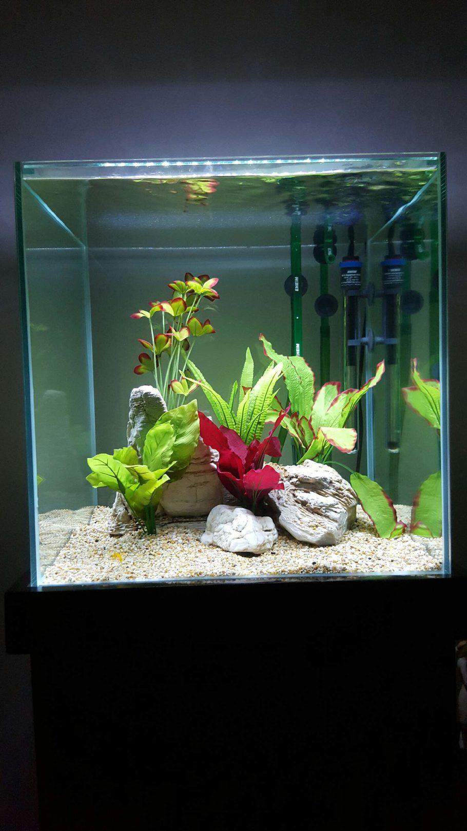 Sealife S Freshwater Tanks Photo Id 43315 Full Version
