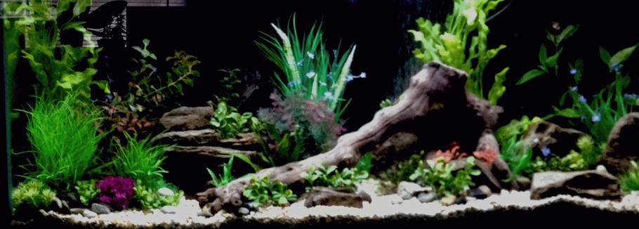 55 gallon freshwater tank two weeks in haven\'t decided on fish yet any suggestions