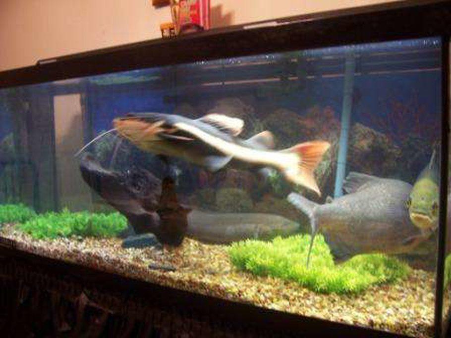 Gadgetman S Freshwater Tanks Details And Photos Photo 6354 Ratemyfishtank