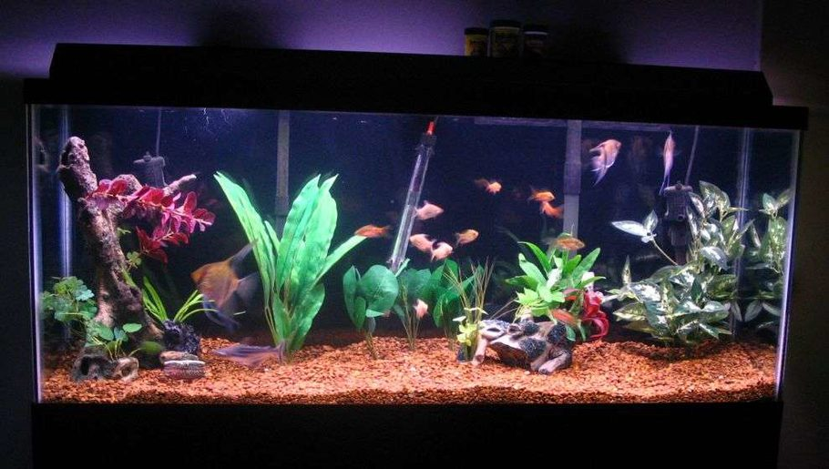 Sfent4ca 39 s freshwater tanks photo id 7359 full version for 55 gallon aquarium decoration ideas
