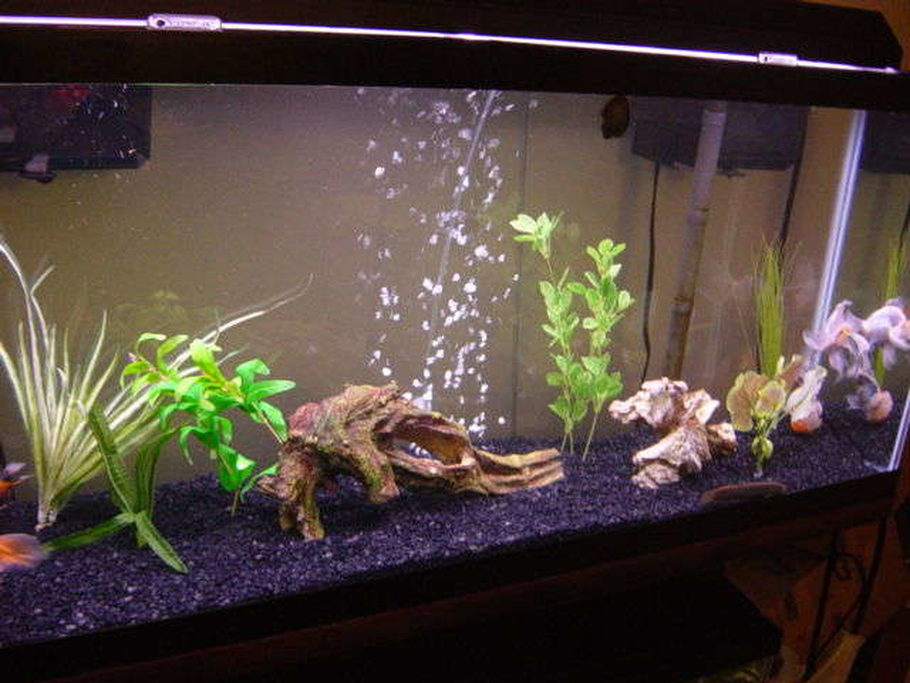 55 Gallon All Glass Tank Aquaclear 110 And 70 HOB Filters 12
