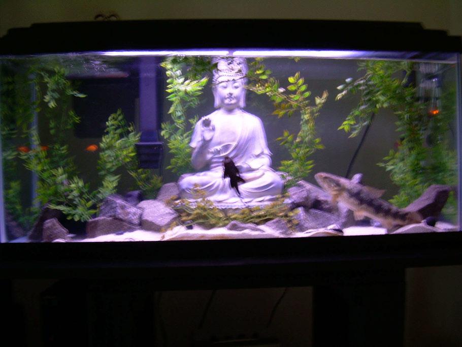 blacktoking 39 s freshwater tanks photo id 9274 full. Black Bedroom Furniture Sets. Home Design Ideas