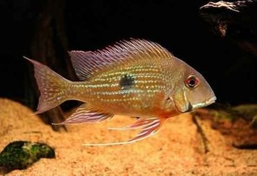 Breeding Freshwater Fish