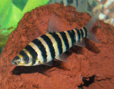 Freshwater Fish Article Database