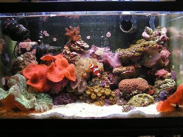 Tips for Feeding Saltwater Aquarium Fish
