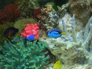 Understanding the Coloration of Saltwater Fish