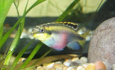 Behavioral Changes and Problems in Aquarium Fish