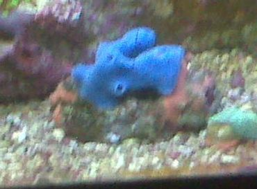 How to Care for Marine Blue Sponges