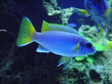 North American Aquariums Go Green